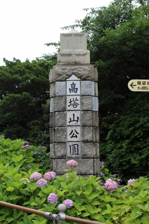 北九州 若松 高塔山公園の紫陽花です。