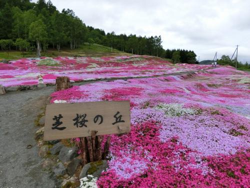 美国、倶知安で過ごした楽しい時間♪綺麗な芝桜と美味しい海鮮丼☆