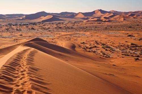 ナミブ砂漠の画像 p1_2