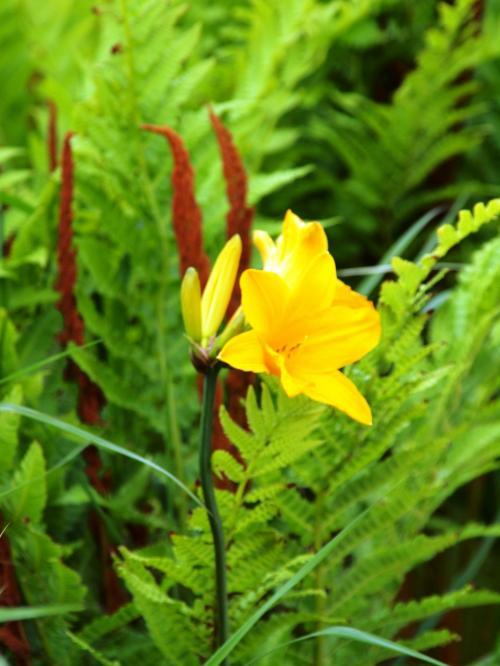 北海道/北の大地に咲く花に逢いに日本のてっぺん稚内へ@天北の湯ドーミーイン稚内(2014年6月)