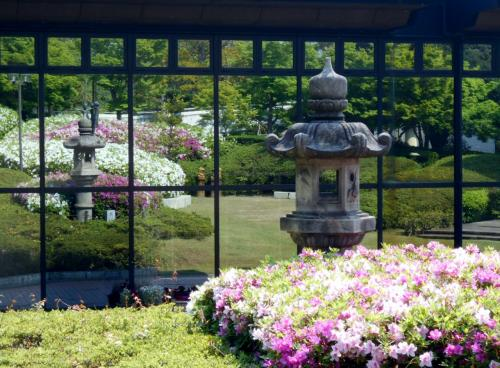 大府市大倉公園「つつじまつり」