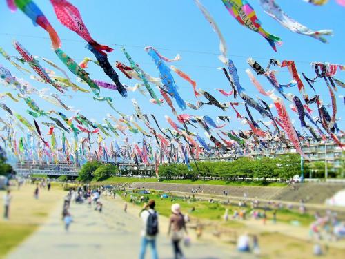 大阪の北の方、ほとんど京都?というところにある高槻市。<br />そこで毎年4月の終わり頃から行われる、こいのぼりフェスタ1000に行ってきました。<br /><br />魚類が好きなので?、こいのぼりが大好きな私。<br />それが1000匹泳ぐという、このイベントを知ってからは、毎年のようにふらふらと引き寄せられてしまって。<br /><br />今日はそんなイベントをご紹介します。
