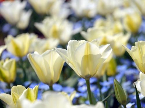 春の花咲く白河へ