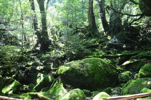 すごく歩いた2泊3日屋久島(3)【もののけ姫の森・白谷雲水峡】