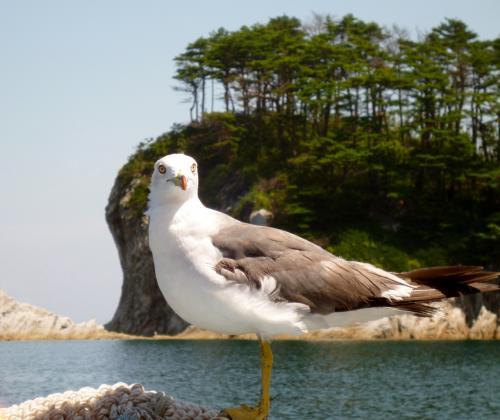 宮古・浄土ヶ浜へおいでよ。やっぱす、夏は海だべ