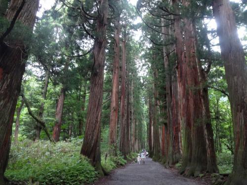 戸隠奥社参道杉並木と戸隠森林植物園を楽しんで来ました。