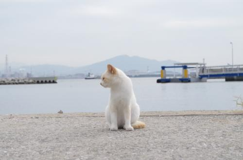 北九州で有名な猫島  馬島へ。<br />小倉港から市営渡船「こくら丸」に乗ること20分。<br />この船で、もう1箇所有名な猫島  藍島へも渡れる。<br />台風がくる直前、秋のやわらかな天候に恵まれ、たくさんの猫たちとの出会いにも恵まれた。