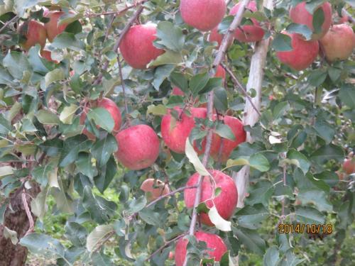 りんごって可愛い・・久しぶりの温泉に心も体もほっこり^^人の温かさにもほっこり^^