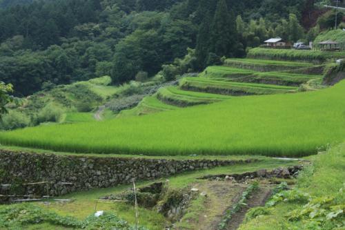 2014.7 大雨の恵那峡と坂折棚田