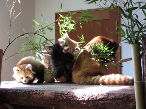 ZOOめぐり2014 第10回(今年生まれの双子ちゃんに対面@茶臼山動物園)