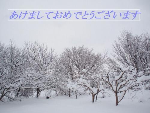 大雪の石川県 片山津温泉と食事を楽しみ 初めての雪かきを経験してきました