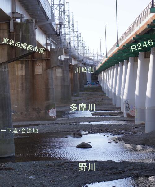 東京の清流・野川をさかのぼる1(下流・二子玉川)