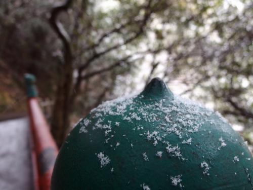 最強寒波襲来 思わぬ雪景色の金華山♪