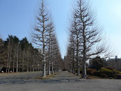 快晴の東京を歩き、食し、楽しみました!!Part2は新宿御苑