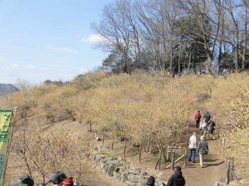 2015冬 長瀞:長瀞アルプスと宝登山のロウバイ園とわらじカツ丼