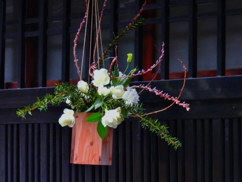 雨の朝 人通りのない花街先斗町に咲く艶やかな華