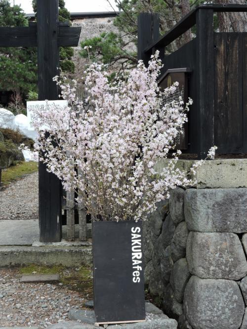 かみのやま桜フェス2015「春を待つ 武家屋敷に 桜咲く。」