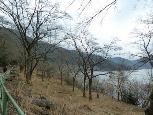☆きれいな桜が咲きますように☆ 【第18回土師ダム桜守プロジェクト】に参加してきました!