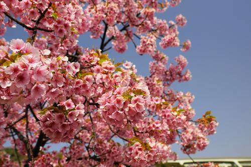 花みどりフェアが始まった淡路島に・・・行ってきました!