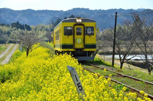 春の房総1泊2日の旅(1)~菜の花を追いかけて@いすみ鉄道沿線