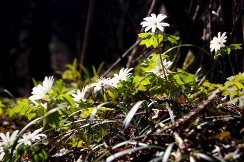 ◆花の谷・大風川渓谷&花滝