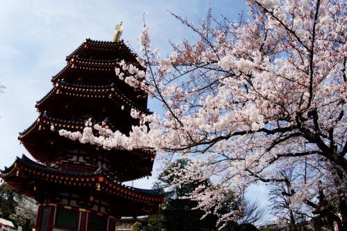 やっぱ桜の時期は古社寺でしょ!川崎大師編