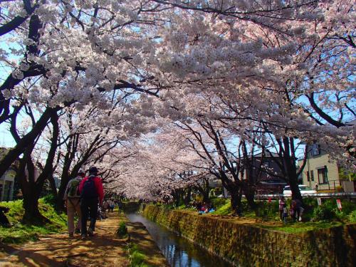 満開の千本桜の下でピクニック☆昼顔のロケ地「泉の森」