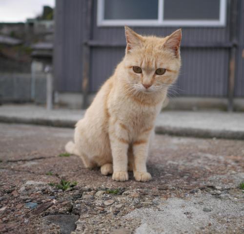 青島の猫に会いに、愛媛1泊2日の旅 青島編