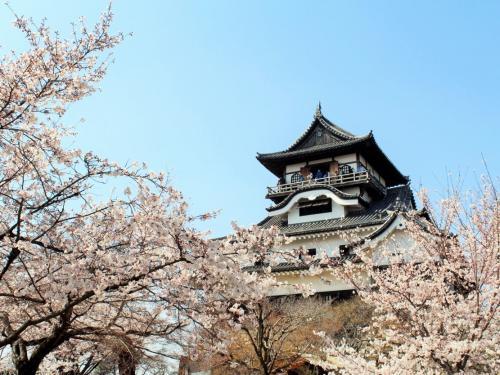 満開の桜☆*:.。.イルミネーションの後は犬山城で春爛漫お花見☆彡