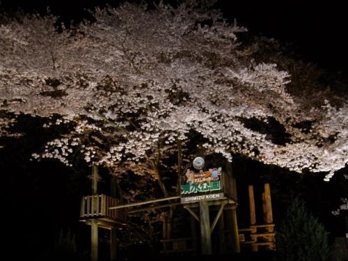 2015年 ☆桜の名所、清水公園で夜桜☆