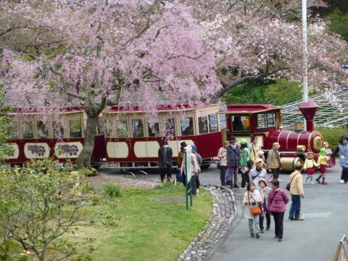 浜名湖・花フェスタ(はままつフラワーパーク)に行ってきました。