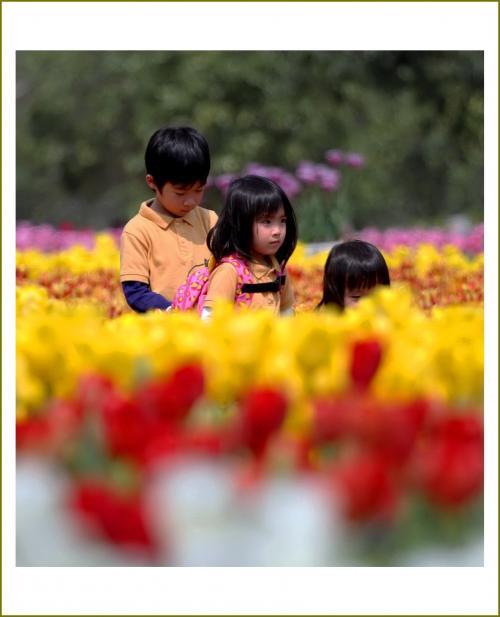 Solitary Journey [1567] 満開!春のチューリップ祭♪650品種85万本、国内最大級のチューリップの丘<世羅高原農場>広島県世羅町