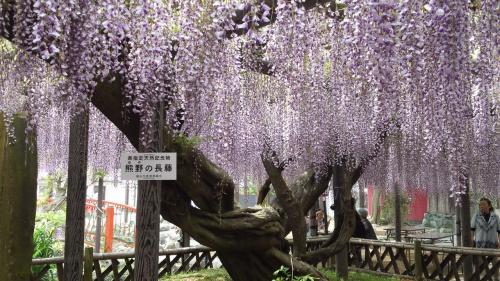 春の磐田探訪☆花めぐりタダめぐり!