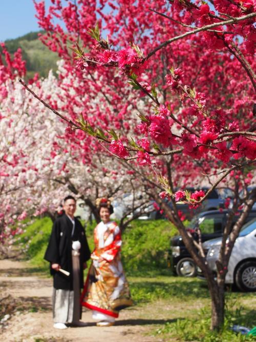 2015春 花桃で春爛漫の昼神温泉&かんてんぱぱガーデン&駒ヶ根高原グルメでお腹いっぱいの旅 #ユルイの宿恵山