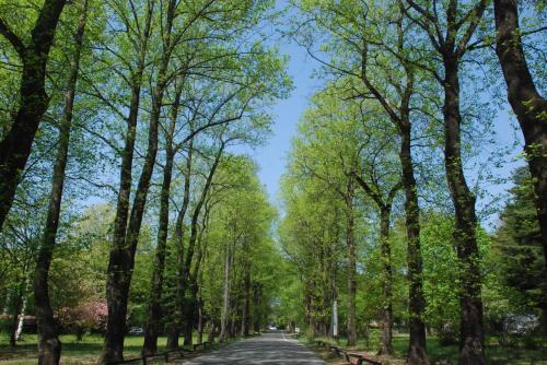 新緑のユリノキ並木から伊那の里山を歩く旅(長野)