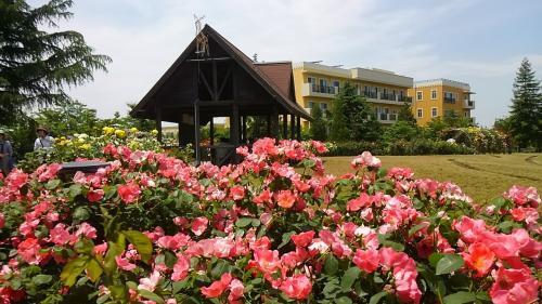 刈谷ミササガパークの薔薇が満開