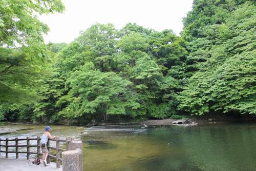 千葉県 君津市 新緑の亀山湖