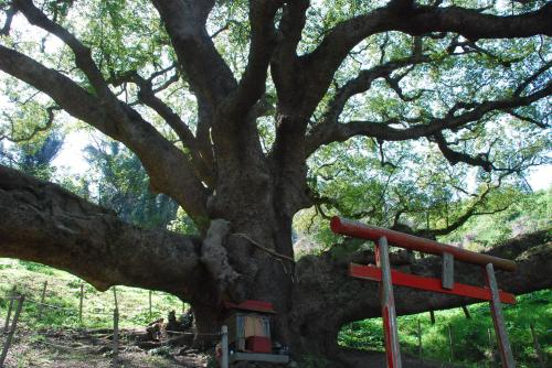 志志島の樹齢1200年の大楠からパワーをもらう旅(四国 香川)