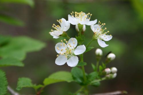 【思い出の旅】嬬恋~新緑と花に癒された旅~
