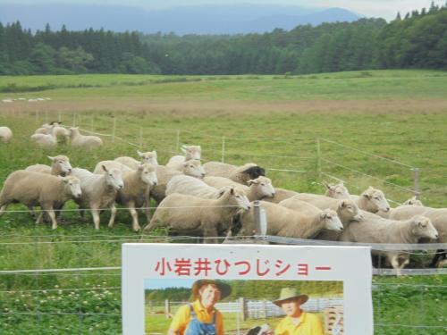 小岩井農場 (小岩井ひつじショー)