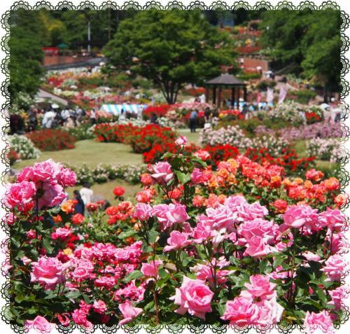 薔薇・・・バラ・・・ばら・・・に包まれた一日 § 山形県村山市・東沢バラ公園 §