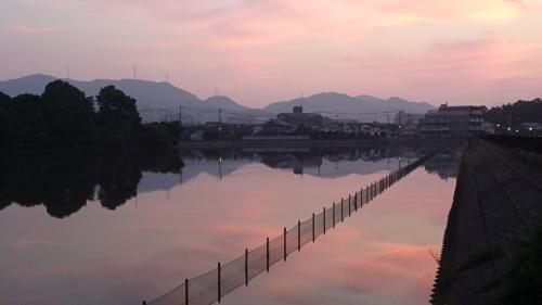 宝塚 上の池の白鳥はいませんでした。
