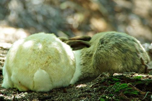 ウサギ島に上陸
