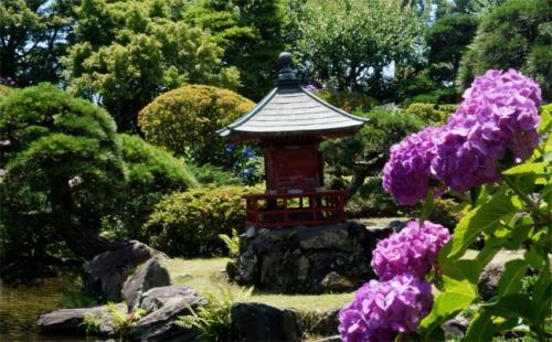 まだまだあじさい!和の庭園に咲く 水戸のあじさいまつり 保和苑
