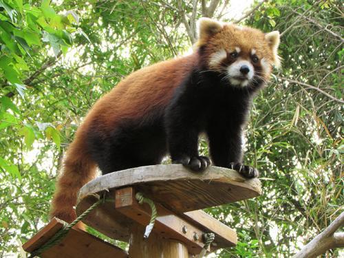 四国動物園巡礼?の旅《5》 わんぱーくとのいち動物公園