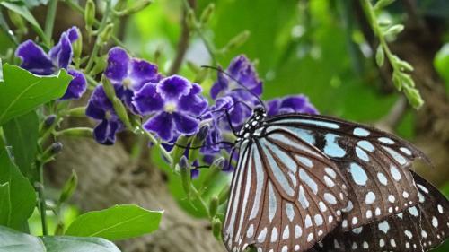 伊丹市昆虫館 蝶の館
