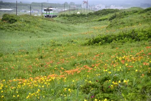 初夏の北海道、道東地方を巡る旅 ~オホーツク海周辺に咲き広がるエゾスカシユリやエゾキスゲを見に訪れてみた~
