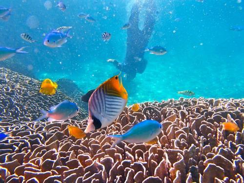 2015 夏がきた~♪♪ [vol.1]  台風を飛び越えて... 八重山諸島:石垣島で、世界最大級の青珊瑚の大群落が見た~い。
