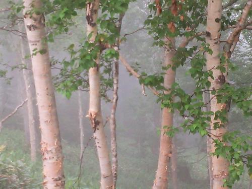 霧に走る2015/07霧だらけ道東みずうみ紀行①(Driving in fog 屈斜路湖、摩周湖、網走湖)