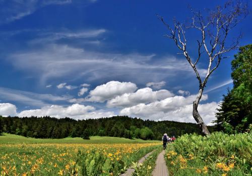 夏の尾瀬沼・大江湿原をフォトハイキング